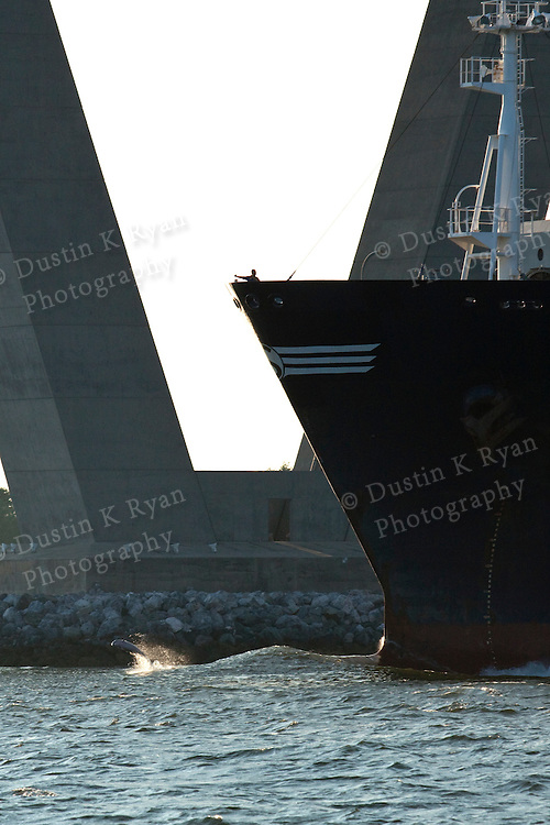 Container Ships charleston south carolina bottlenose dolphin jumping bow wake
