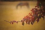Fall in Rural Auburn, California.