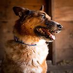 20130803 Jenny's Australian Cattle Dogs