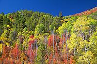 Fall Colors, Swan Valley, Idaho