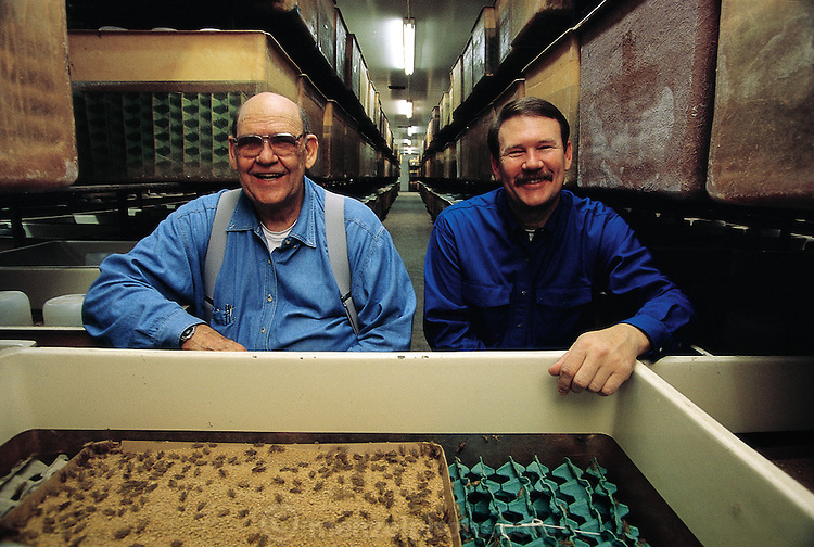 Russ Bassett and his father Dale who share a family business of raising crickets and mealworms, called Basset's Cricket Ranch. The insects they raise are used mostly for bait and pet shops (lizard food) but they do occasionally  supply the HotLix Candy Company with its crickets and mealworms. Visalia, California, United States. (Man Eating Bugs page 180 Top)