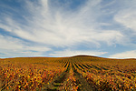 Carneros, Napa County, California