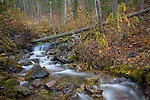 Montana, Western, Whitefish. A mountain stream cascades through moss covered rocks and autumn foliage.