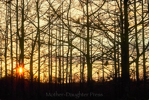 Everglades National Park Sunset thru cypress trees swamp, Florida in January