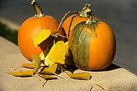 FRUITS - VEGETABLES<br /> Pumpkins w/Aspen Leaves<br /> Santa Fe, NM