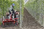 Foto: VidiPhoto<br /> <br /> OOSTERHOUT - Boomkwekers Geurt en Gijsbert van Setten van boomkwekerij Letteland uit Opheusden gaan woensdag mechanisch het onkruid te lijf op een perceel in Oosterhout. Mechnische bestrijding is viermaal zoveel werk als spuiten met bestrijdingsmiddelen. Het is echter veel milieuvriendelijker en de bomen zijn een stuk gezonder.