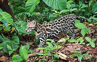 Costa Rica 2016 Wildlife