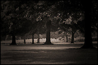 Brown toned, faded, old style photo trees in park