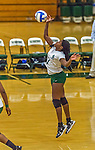 1 November 2015: SUNY College at Old Westbury Panther Outside and Middle Hitter Shanayia Lloyd, a Freshman from Roosevelt, NY, in action against the Yeshiva University Maccabees at SUNY Old Westbury in Old Westbury, NY. The Panthers edged out the Maccabees 3-2 in NCAA women's volleyball, Skyline Conference play. Mandatory Credit: Ed Wolfstein Photo *** RAW (NEF) Image File Available ***