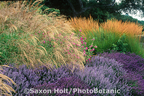 Cover Photo - Plants and Landscapes for Summer-Dry Climates