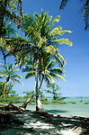 Itaparica Island, Brazil. Tropical beach, crossed palm trees, green sea, blue sky and a few mangroves in the sea. Bahia.