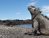 Latin America Nature & Wildlife