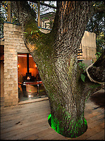 BNPS.co.uk (01202 558833)<br /> Pic: Mallinson/BNPS<br /> <br /> Bathroom with a view...<br /> <br /> Release your inner Tarzan...in Britain's poshest treehouse.<br /> <br /> A luxury glamping site in deepest Dorset has created a luxurious treehouse that comes with its own sauna, hot tub, rotating fireplace and pizza oven.<br /> <br /> The Woodsman's Treehouse is perched 30ft from the ground on long stilts and has two floors. <br /> <br /> It has a spiral staircase and a stainless steel slide for quick access to the ground and can be rented out from &pound;390 a night. <br /> <br /> It is located at the Crafty Camping glamping site at Holditch in west Dorset.