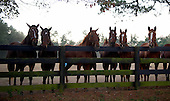 10/25/2014 - Aiken Fall Races
