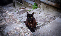 Black Cat Sitting on a Step - Sept 2013.