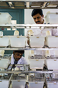 Veterinarians check on the rats in the research lab of the Pharmacy of the National Research Institute of Panchakarma in Cheruthuruthy in Thissur district of Kerala, India.