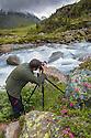 Photographer in mountain landscape with blooming Alpenrose {Rhododendron ferrugineum}. Kaunertal Naturpark, Nordtirol, Austrian Alps. July.