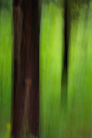 A vertical natural abstract of a forest. Tree trunks against the surrounding green leaves.