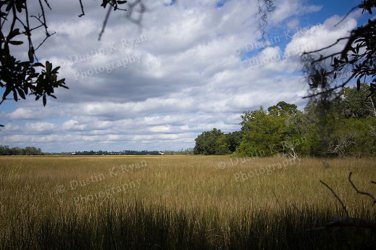 Marsh grass at Boon Hall Plantation Charleston South Carolina