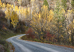 Idaho, Eastern, A road through the Caribou Mountains in autumn.