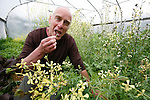 Dan Jason munches on some spring lettuce in his greenhouse where he runs his business, Salt Spring Seeds, on Salt Spring Island, British Columbia, Canada. Photo assignment for the Globe and Mail national newspaper in Canada.