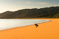 Woman enjoying sunrise on golden beach in Totaranui, Abel Tasman National Park, Nelson Region, New Zealand