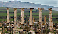 Ruined Ionic columns of the Forum lining the Decumanus Maximus, Volubilis, Morocco, pictured on December 25, 2009. The huge stone blocks may have been pedestals for statues. Around the city fertile plains providing agriculural produce stretch towards the mountains. Volubilis, founded in the 3rd century BC was an important city in the Western part of Roman North Africa. The Romans abandoned it in the 3rd century AD. Excavations were started by the French in 1915, and it became a UNESCO World Heritage site in 1997. Picture by Manuel Cohen