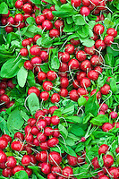 Freshly-picked radishes on sale at Farmers' Market