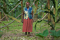 Banana plantation. When banana trees are small enough light penetrates to allow intercropping with beans or maize. When they reach full size the shade generated by the large leaves enforces a monoculture. Matoke is both the staple food and main cash crop of these farmers.
