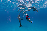 RW4852-D. Atlantic Spotted Dolphins (Stenella frontalis), resident pods of wild dolphins in the Bahamas off Bimini and Grand Bahama Island offer eco-tourists from around the world a superb encounter swimming with the playful marine mammals. Bahamas, Atlantic Ocean.<br /> Photo Copyright &copy; Brandon Cole. All rights reserved worldwide.  www.brandoncole.com