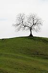 Lone Tree, Yorkshire Dales