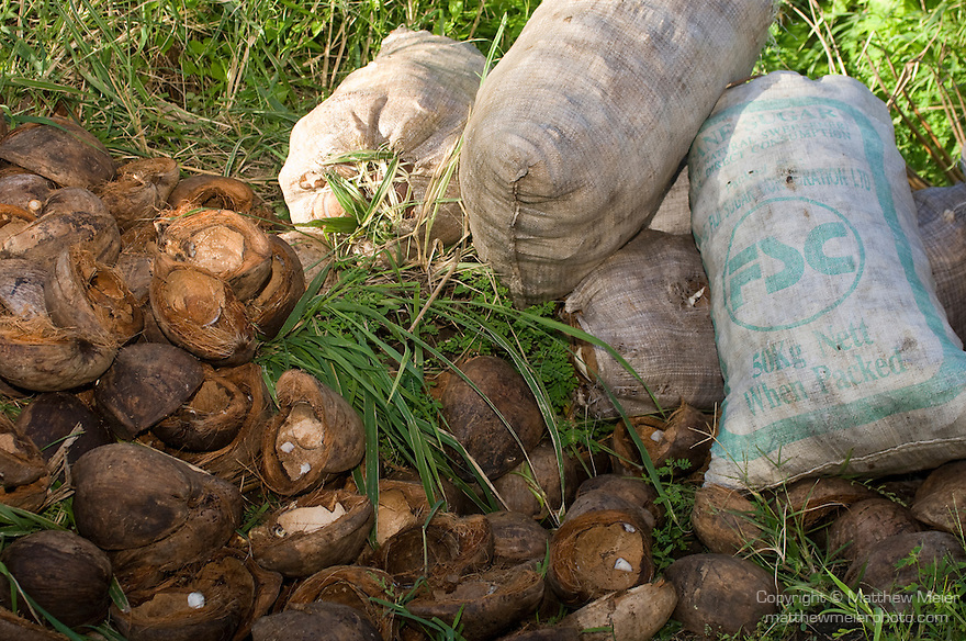 Taveuni, Fiji; coconut meat is placed in bags and the husks are left by the sode of the road for collection, coconut palm trees grow in groves on the southern end of the island, the coconuts are harvested for their meat and the husks are burned to heat water, which creates steam, to generate electricity