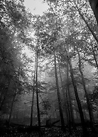 A Black and White Autumn