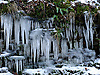 Icicles on frozen moss by the riverside.