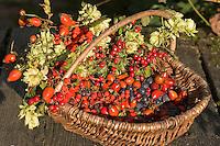 Korb mit heimischen Früchten, Wildfrüchte, Weißdorn (Crataegus), Hagebutten (Rosa), Schlehe (Prunus spinosa), Hopfen (Humulus lupulus), Vogelbeere, Eberesche (Sorbus aucuparia), Ernte