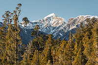 Unnamed peak of Southern Alps with native kahikatea and rimu forest near Whataroa, Westland Tai Poutini National Park, West Coast, UNESCO World Heritage Area, New Zealand, NZ
