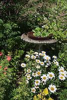 Bird bath, Leucanthemum, Coleus Pineapple Queen, Pistia water lettuce in tiny water feature pond, impatiens, Hydrangea flowering shrub, a mix of annuals and perennials in summer flower garden