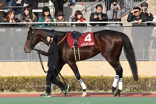 Incantation,<br /> JANUARY 25, 2015 - Horse Racing :<br /> Incantation is led through the paddock before the Tokai TV Hai Tokai Stakes at Chukyo Racecourse in Aichi, Japan. (Photo by Eiichi Yamane/AFLO)