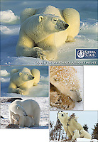 Polar Bears Christmas Card Assortment<br /> <br /> Inside message: Season's Greetings.<br /> <br /> Photographs by Daniel J. Cox, Art Wolfe, and Matthias Breiter. <br /> <br /> Twenty assorted 5 x 7&quot; holiday cards (5 each of 4 designs) plus envelopes in a decorative box. Printed on recycled paper with soy based inks.