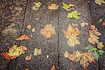 wet leaves on the ground