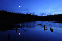 Woodford, VT, USA - August 18, 2007: A beaver pond on a moon lit night atop the Green Mountains of southern Vermont.