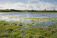Flooded watermeadows in flood plain, near Burford, Oxfordshire, The Cotwolds, England,  United Kingdom