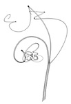 X-ray image of gourd family tendrils (black on white) by Jim Wehtje, specialist in x-ray art and design images.