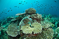 Underwater photos from Sabah, Malaysia