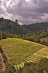 Vineyard above town of Calistoga