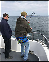 BNPS.co.uk (01202 558833)<br /> Pic: BenBond/BNPS<br /> <br /> Ben struggles to reel in the monster shark. <br /> <br /> A British fisherman has told of how he caught a monster 1,500lbs shark - the biggest ever in Europe.<br /> <br /> Ben Bond, 26, a builder from Yeovil, spent 90 minutes struggling to reel in the deadly 25ft long sixgill shark after it took his bait on a fishing trip to Ireland.<br /> <br /> It was impossible to heave the specimen on board but experienced boat skipper Luke Aston used the recognised formula and measuring its length and girth to calculate its weight.<br /> <br /> Mr Aston said the shark was at least 1,500lbs - 107sts - which makes it the biggest ever caught in not only the British Isles but also in Europe.