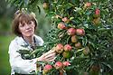 2015_08_30_hailstrom_apples