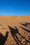 Shadows of a caravan in the Sahara desert Erg Chebbi, Merzouga, Morocco.