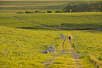 Woman walking on Red House Trail at Tallgrass Prairie National Preserve in the Flint Hills near Strong City, Kansas, AGPix_0604