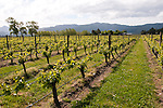 New Zealand South Island, vineyard at Cloudy Bay Winery in Marlborough. Photo copyright  Lee Foster.